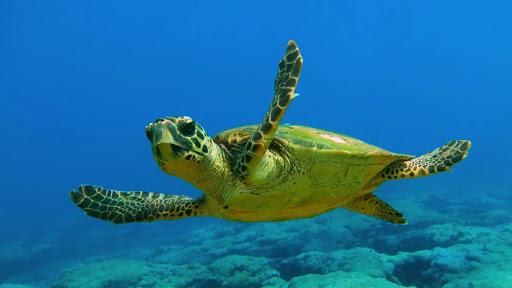 La nascita delle tartarughe dopo il lockdown