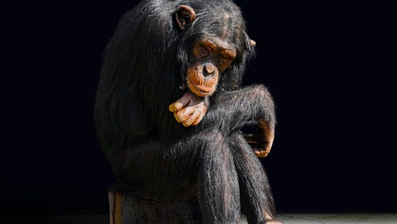 Il senso del lutto nel mondo animale