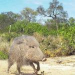 Animali considerati estinti e riapparsi dopo anni