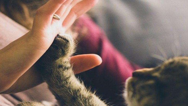 I gatti sanno imitare gli esseri umani?
