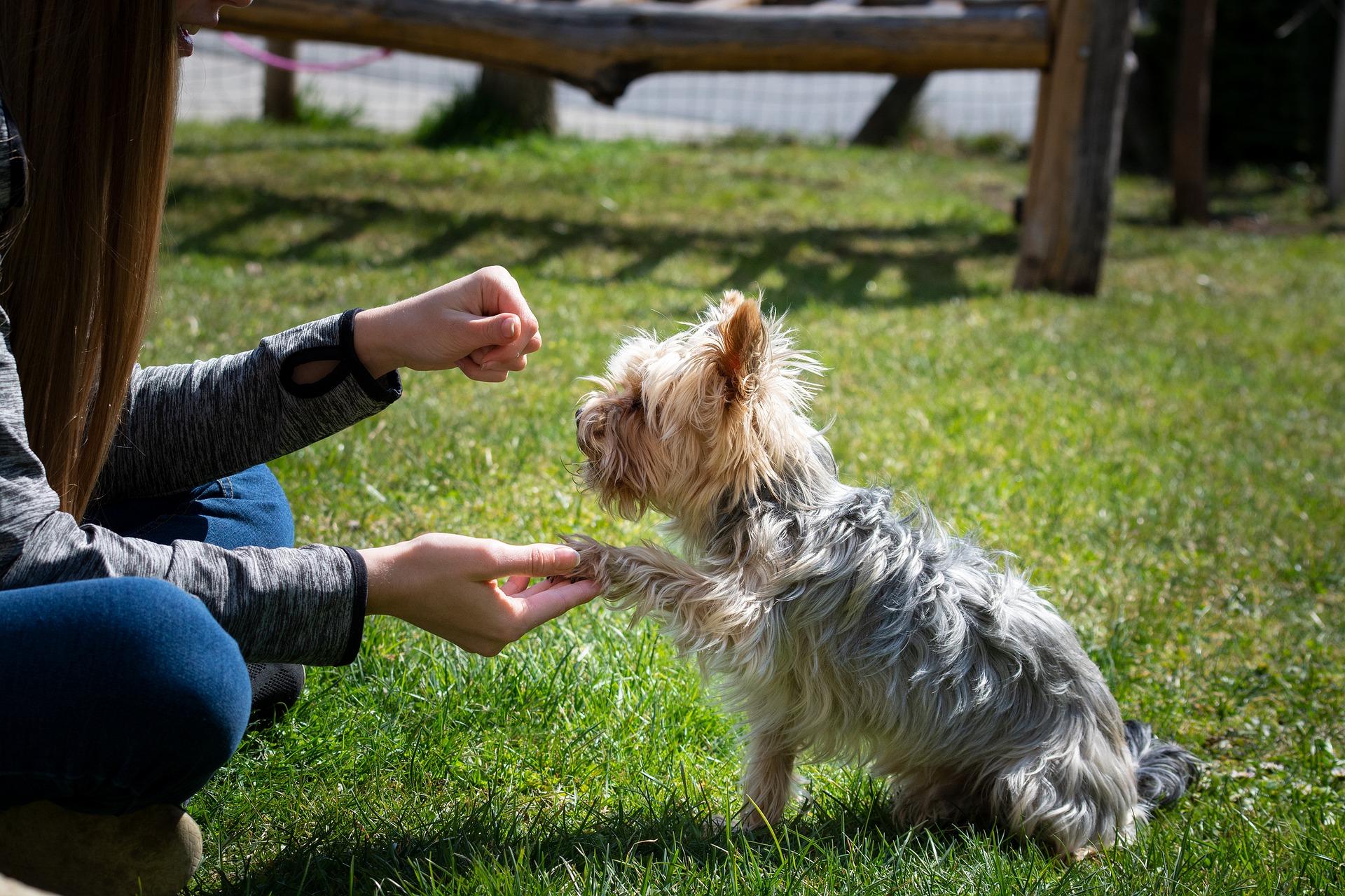 pensiero canino e addestramento