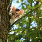 Sindrome da grattacielo: i gatti e le altezze