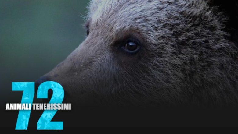Animali Tenerissimi, un documentario Netflix
