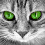 C'è una leggenda dietro la M sulla fronte dei gatti