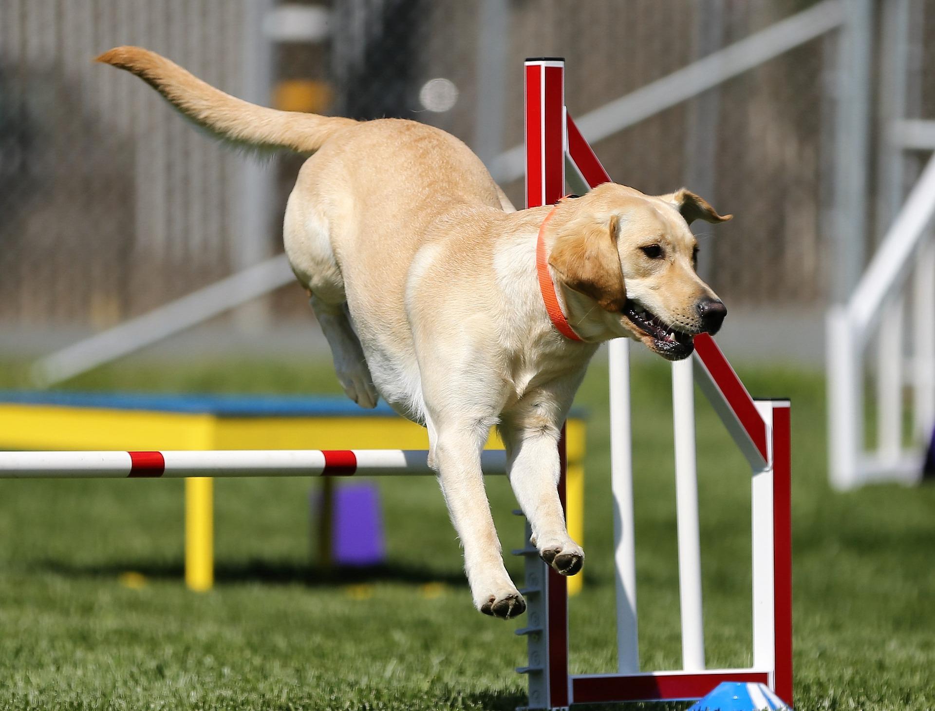 sport da fare con il cane
