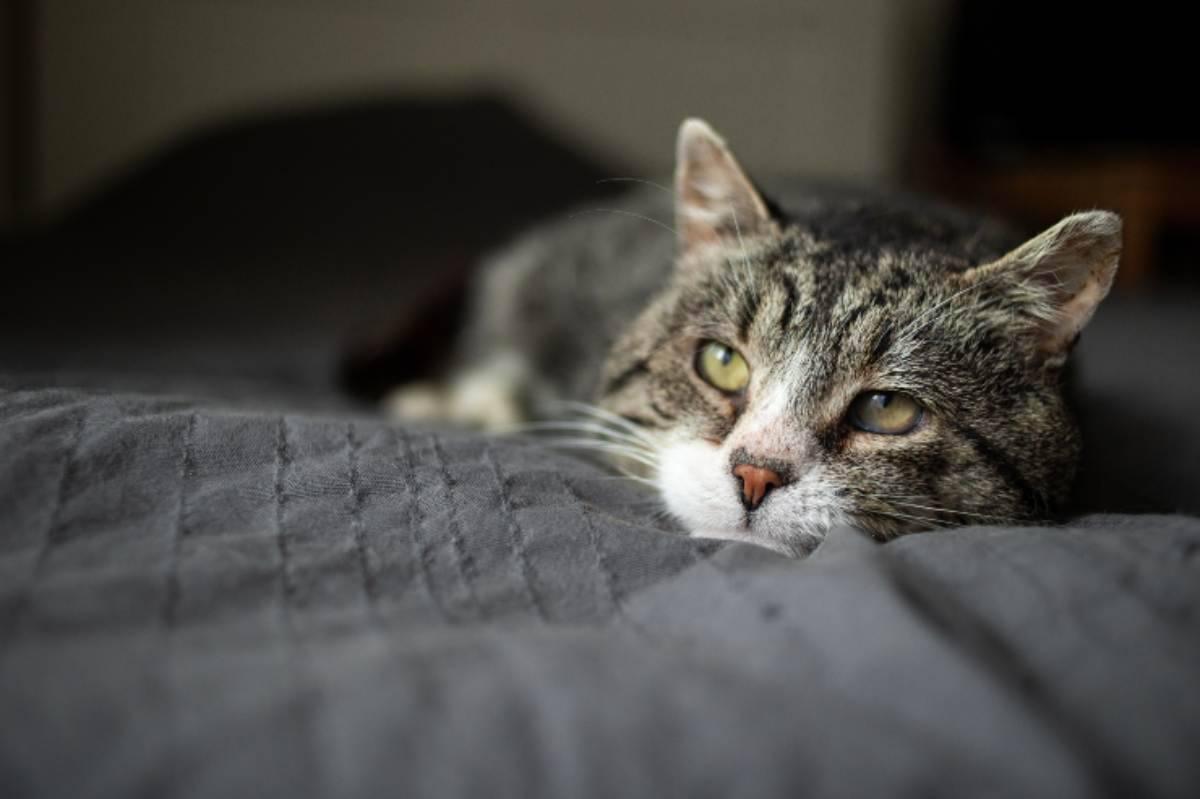 Ictus nel gatto