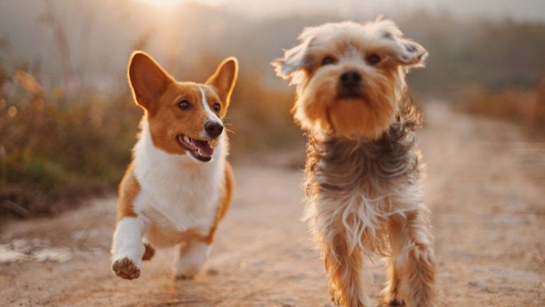 Il cane può essere nominato come erede?
