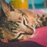 Come capire se il gatto ha un ictus