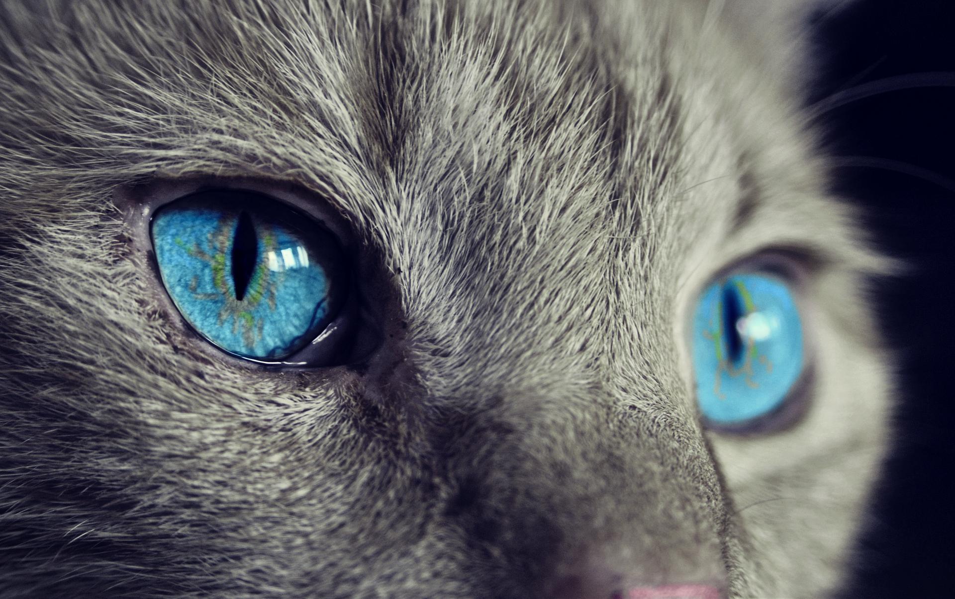 gatto arrabbiato paura