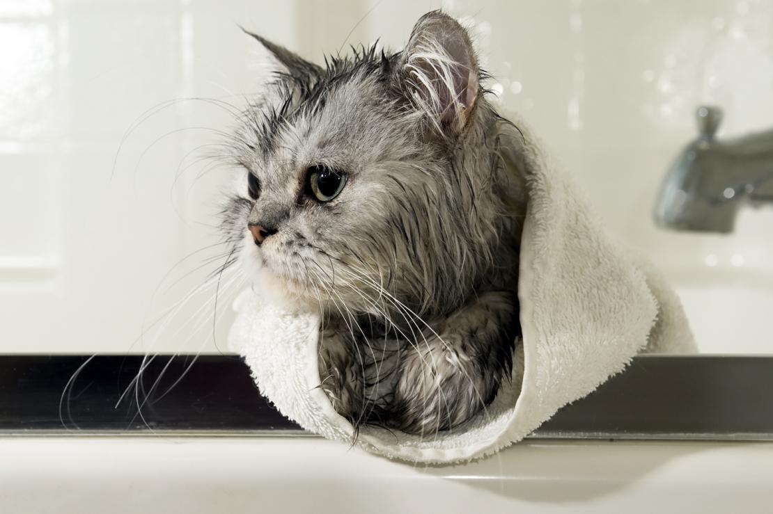 Asciugare il gatto