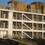 Gli animali bloccati sul canale di Suez