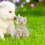 Gli animali rimasti orfani per il Covid