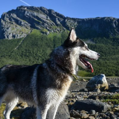 Cani in montagna: regole utili