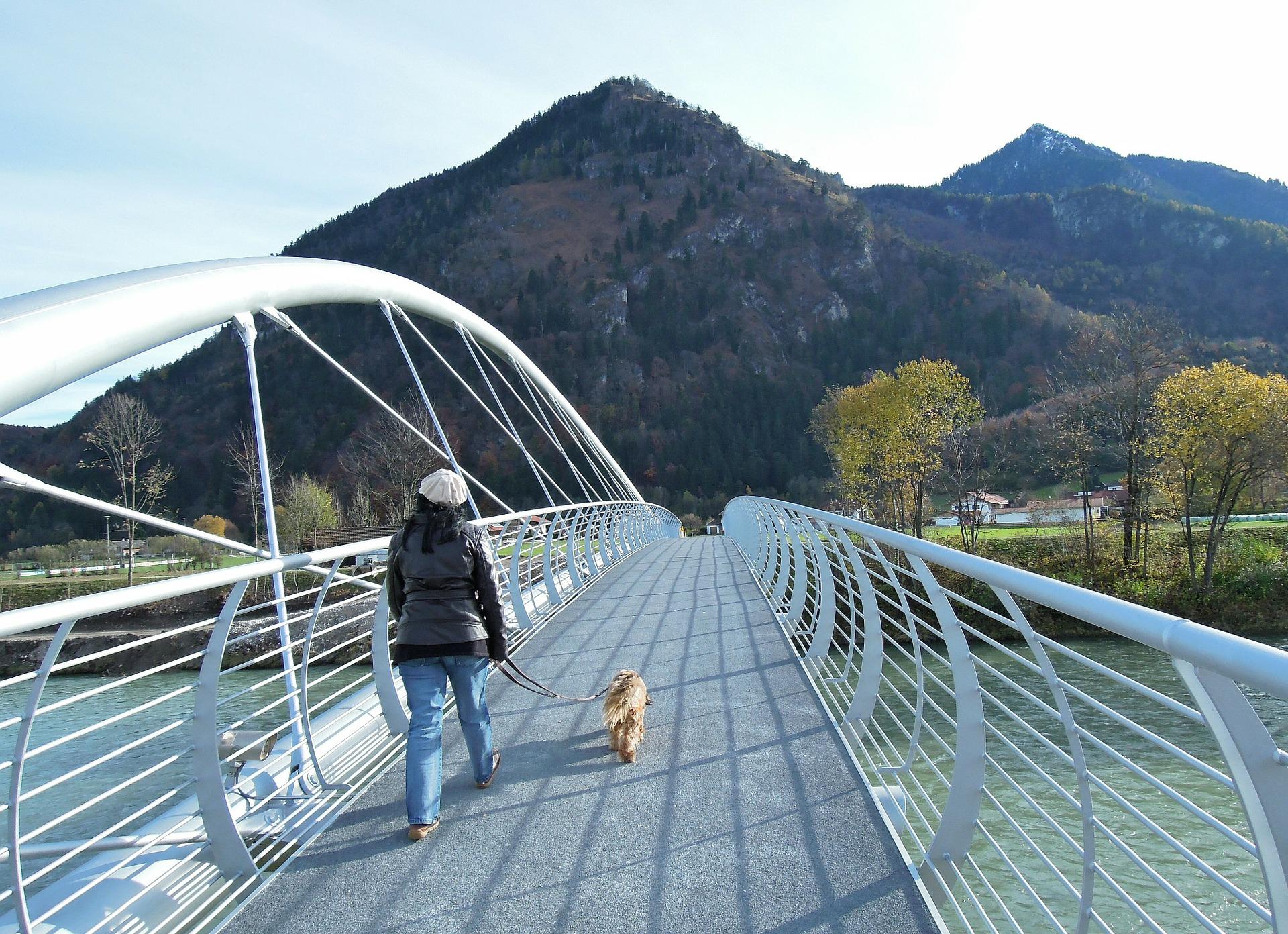cane in montagna collare e guinzaglio