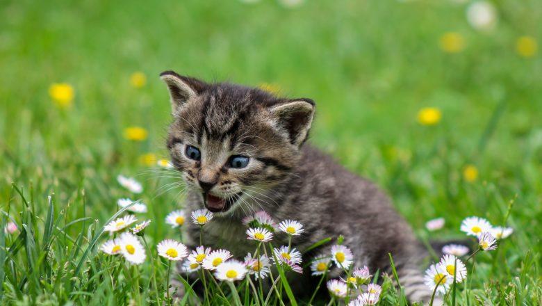 Miagolio dei gatti: cosa vogliono dirci?