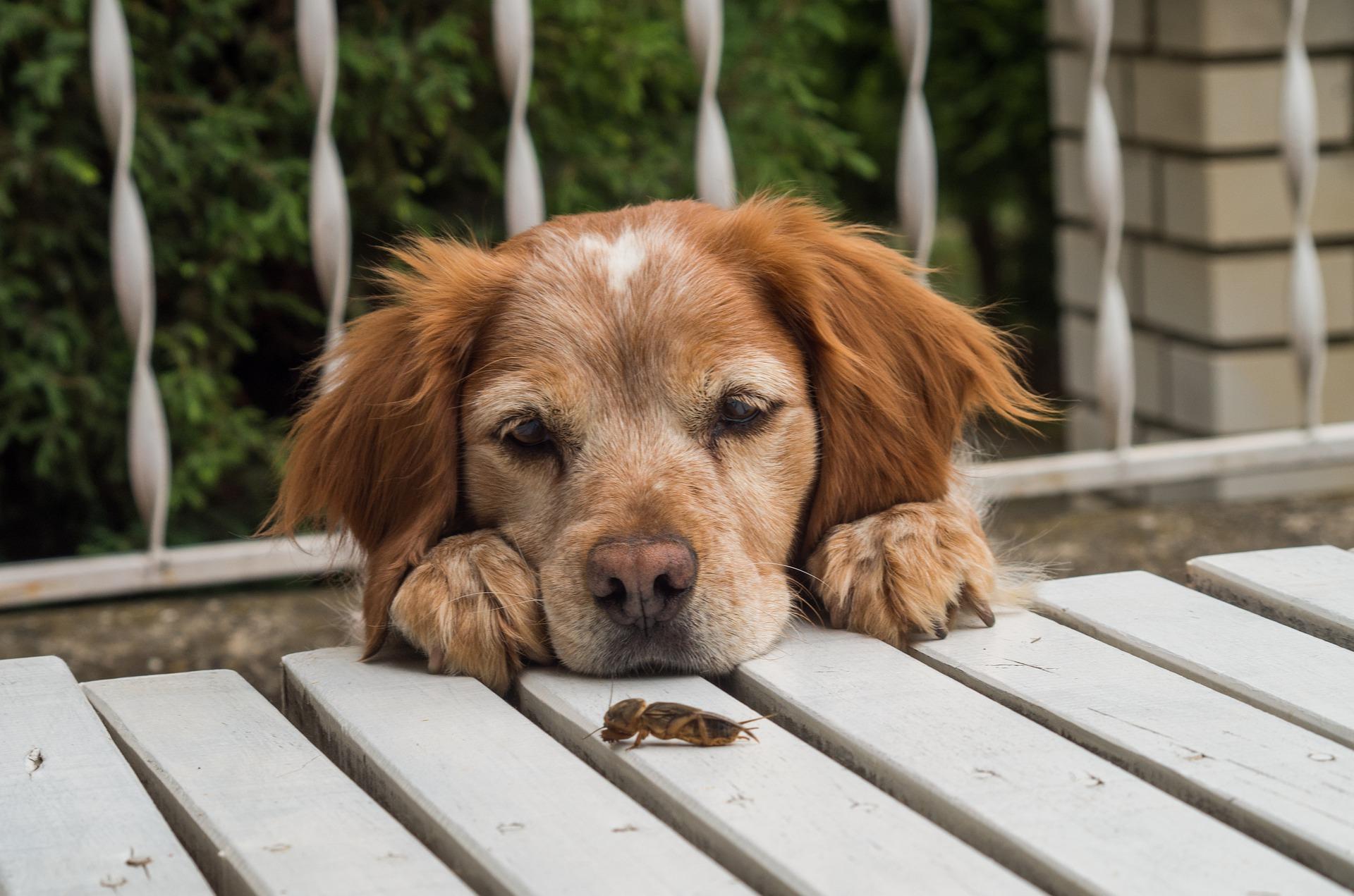 psicologia canina