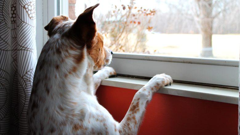 Smarrimento del cane: ecco cosa fare