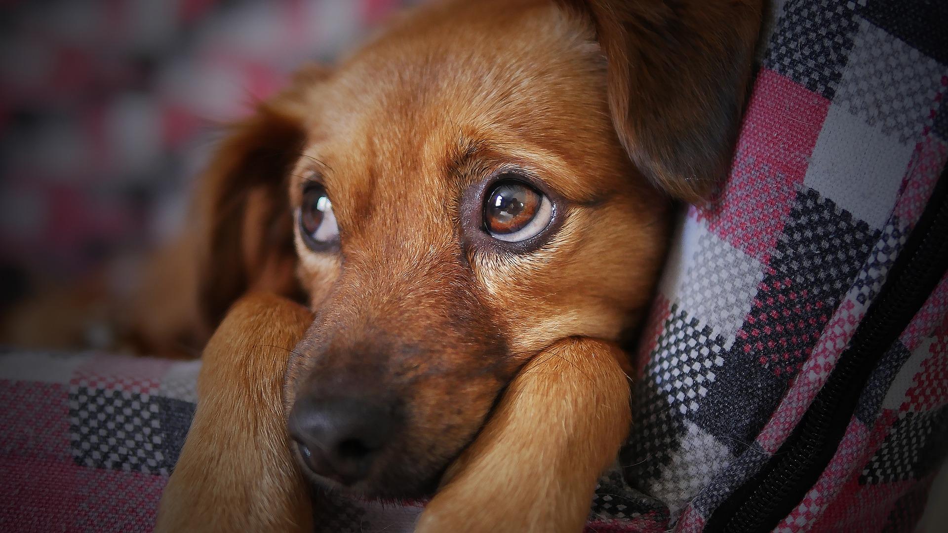 smarrimento del cane cosa fare