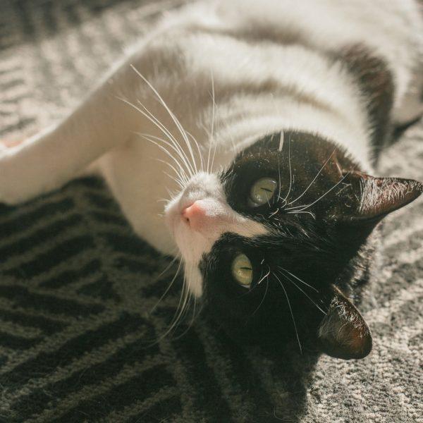 I migliori giochi per il tuo gatto