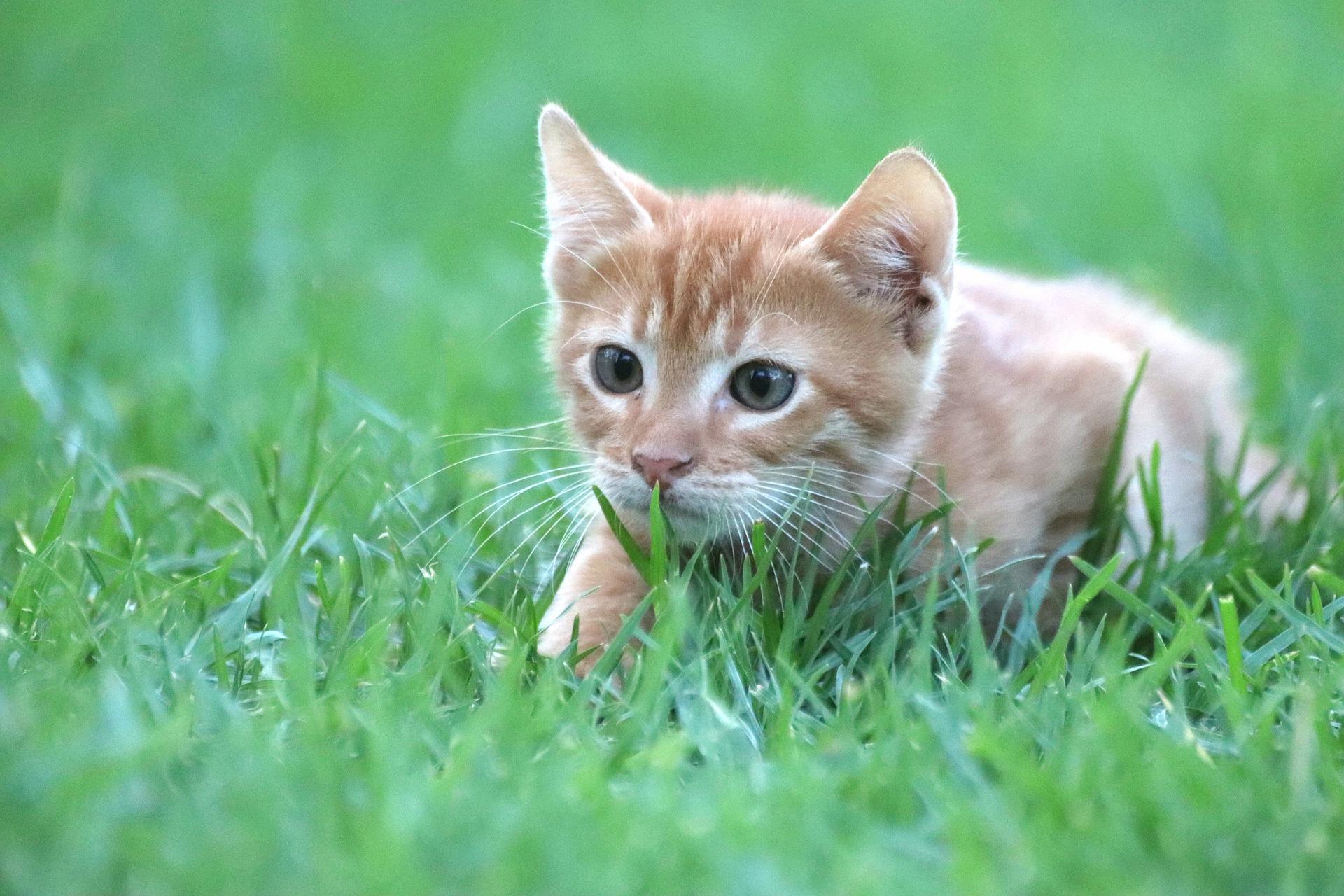 i migliori giochi per gatti erba gatta