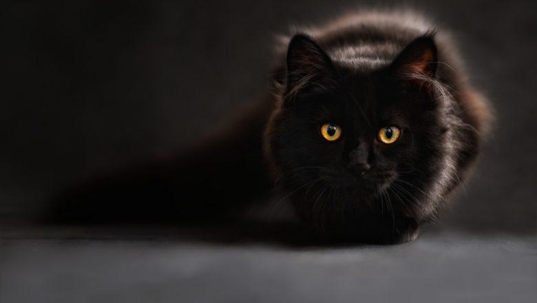 Senso dell'orientamento felino