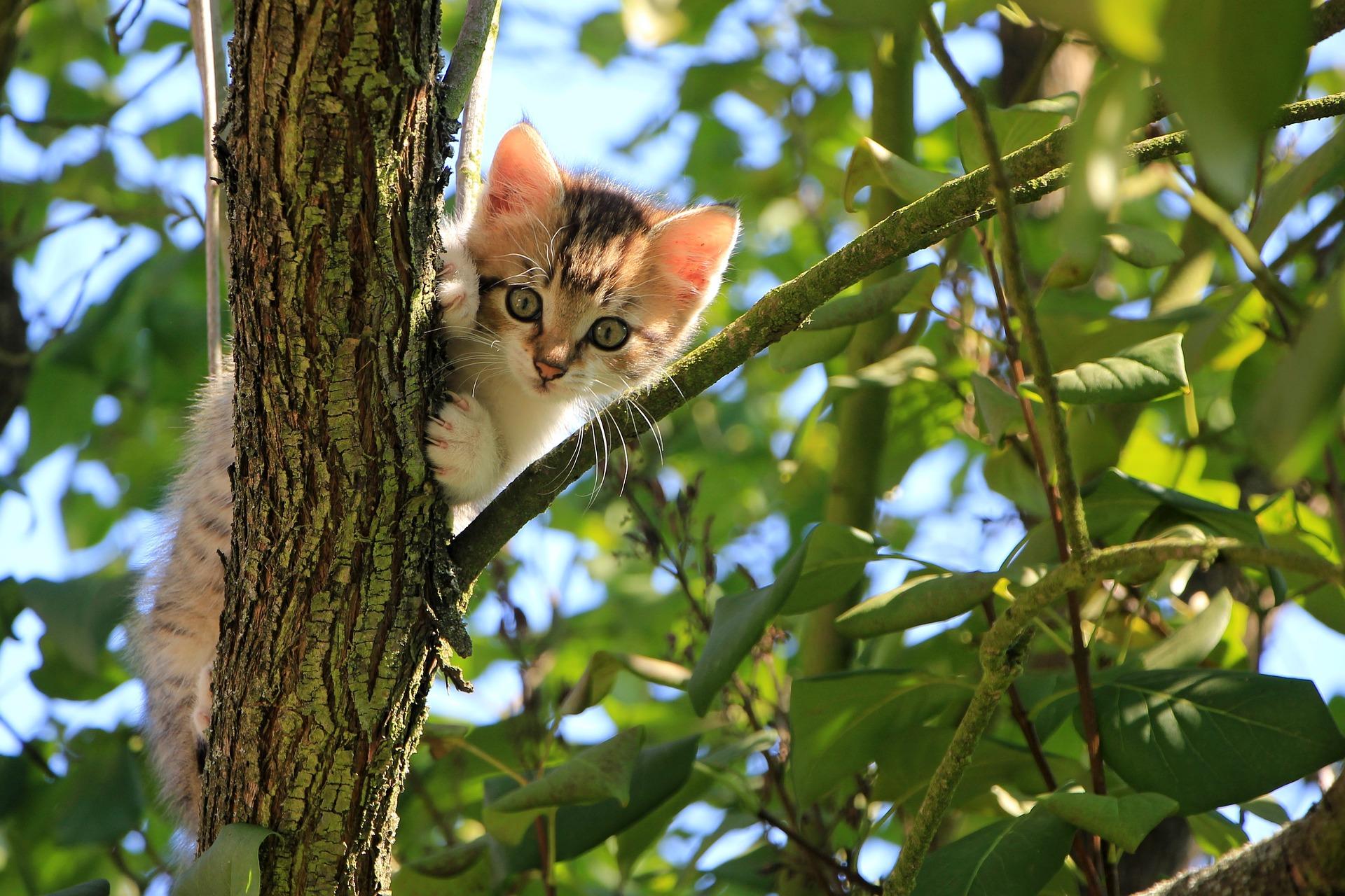 senso dell'orientamento felino homing