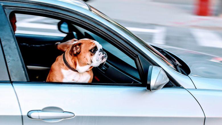 Viaggiare col cane: il codice della strada dice…