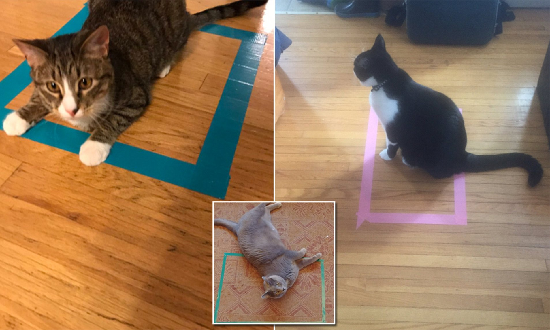 Gatti e scatole immaginarie