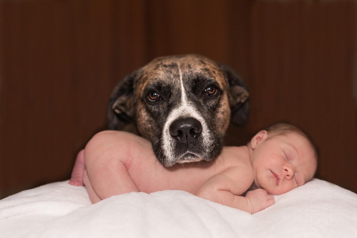 Cane e neonato