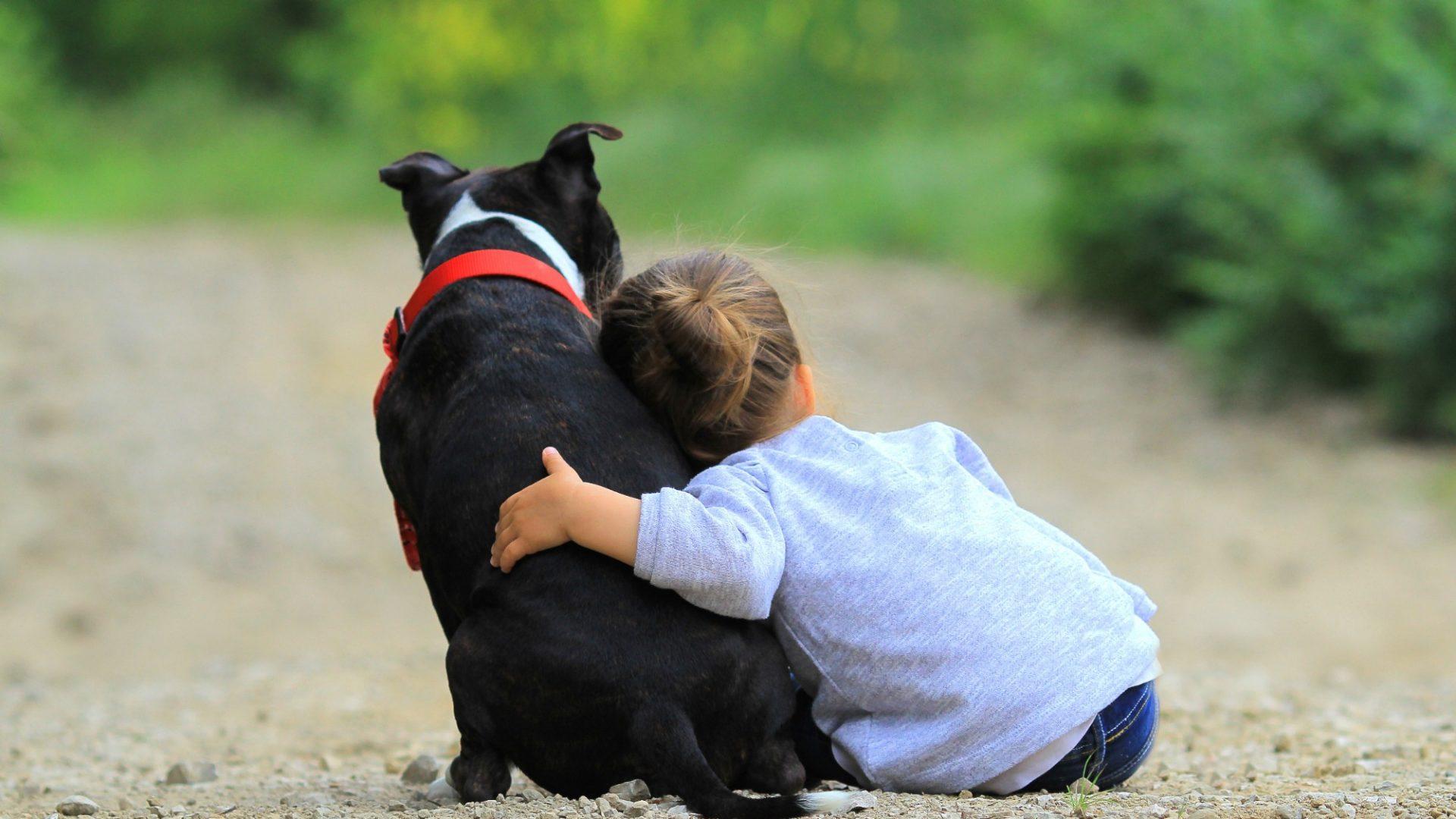 Cani e bambini: l'inizio della convivenza