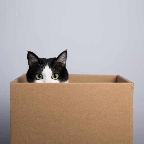 I gatti amano le scatole, anche quelle immaginarie