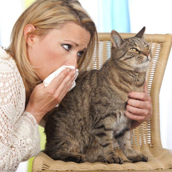 Allergia al pelo del gatto: guida per una convivenza serena