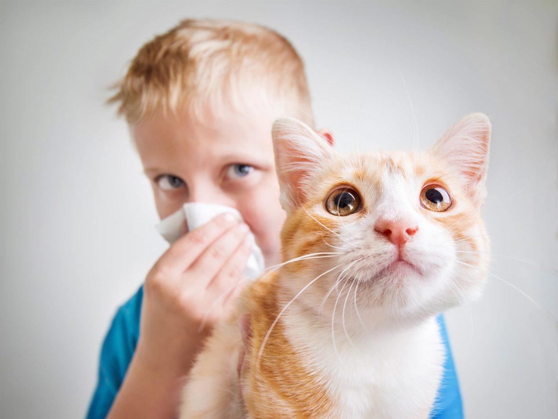 Allergia al pelo del gatto e bambini