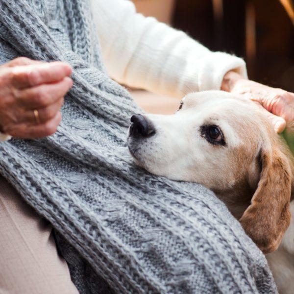Farmaci umani per gli animali, cosa dice il Decreto