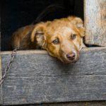 Incendi in Sardegna: cosa è successo agli animali?
