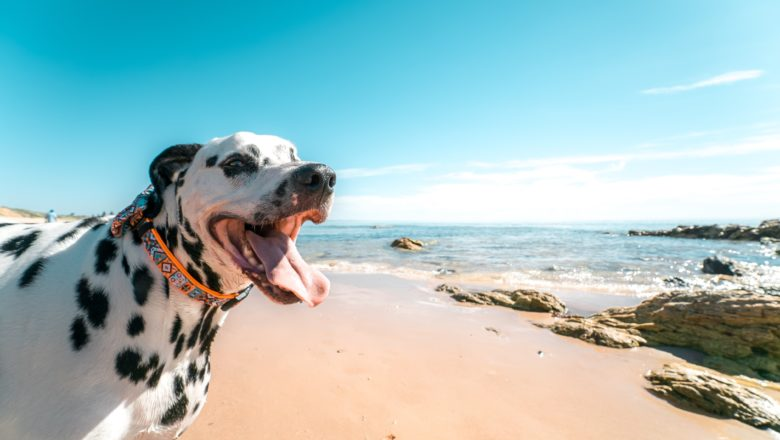 Spiagge per cani: le migliori 2021